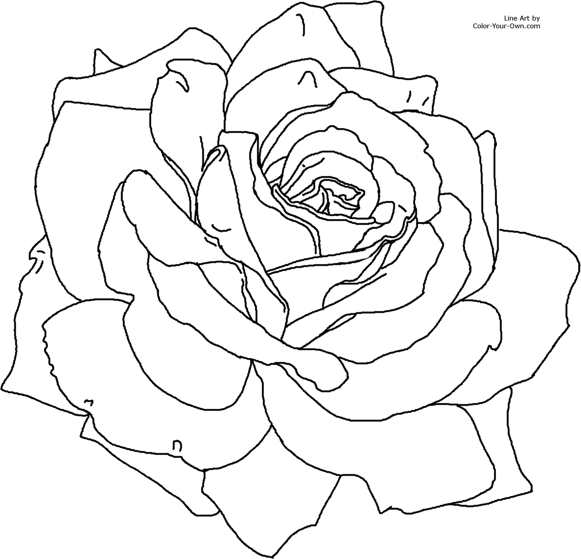Drawn rose line art Coloring For 11 x Flower