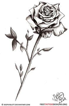 Drawn rose little rose Ideas  long tattoo Tattoo