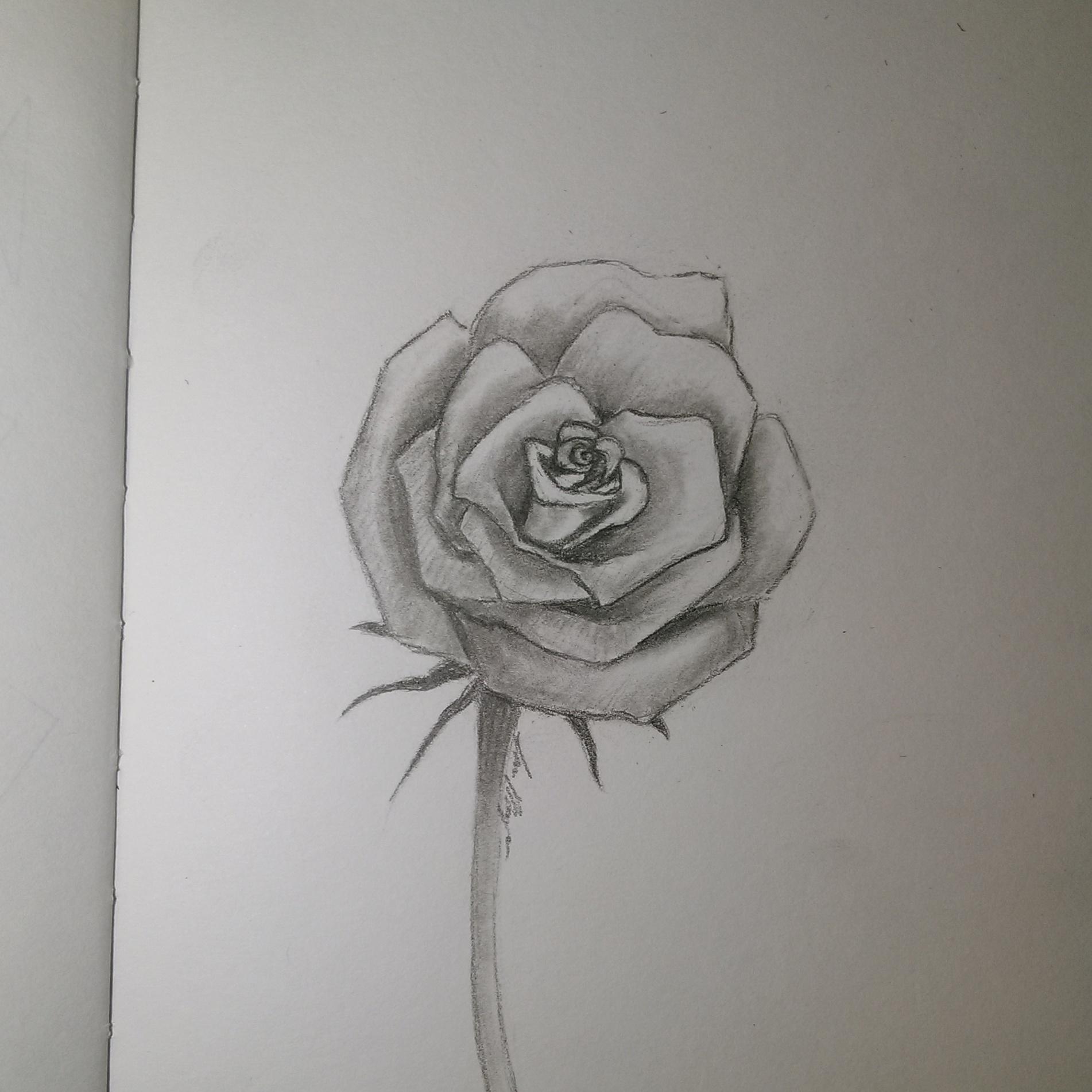 Drawn rose little rose Takukurosaki Download Step I Step