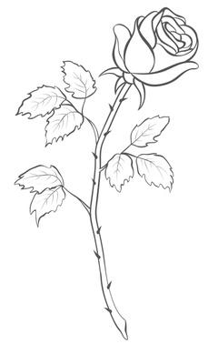 Drawn red rose thorn clipart Outline Flower Rose Outline Pinterest