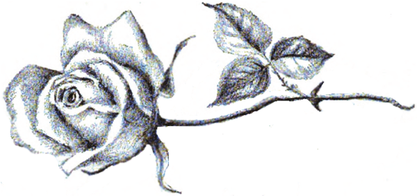 Drawn rose long stem rose Step with Step Drawing step
