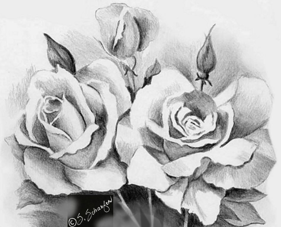 Drawn rose love Bouquet Beautiful Your Rose Beautiful