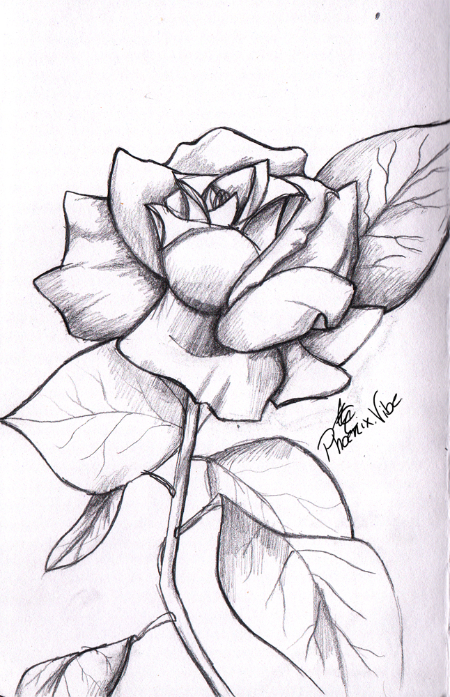 Drawn rose love (•) Pencil Enjoy and rose