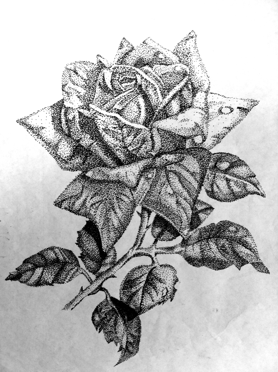 Drawn rose marker Rose Artwork: Drawing Original Smith