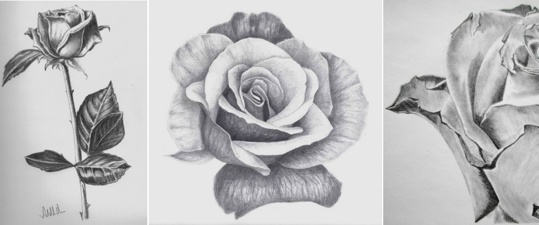 Drawn rose natural form Rose zoom Tonal full to