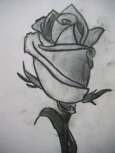 Drawn rose natural form Natural beautiful – Rose of