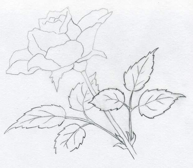 Drawn rose natural form Easy pencil carol simple to