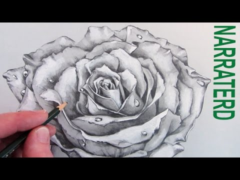 Drawn rose open YouTube  Rose: Narrated How