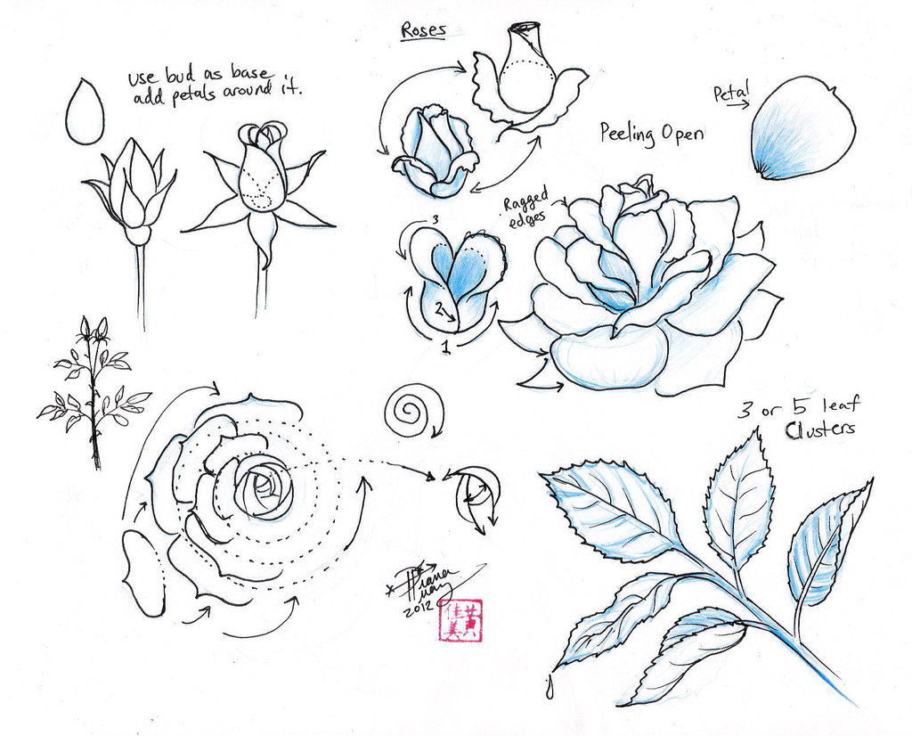 Drawn rose open Draw the Draw on (