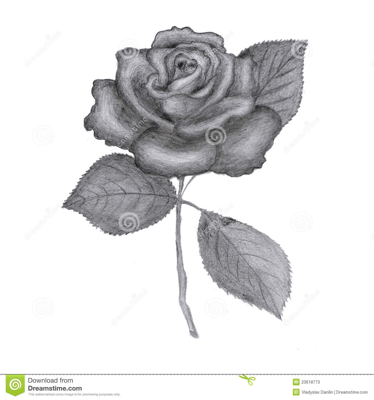 Drawn rose open Open Drawn How To Drawn