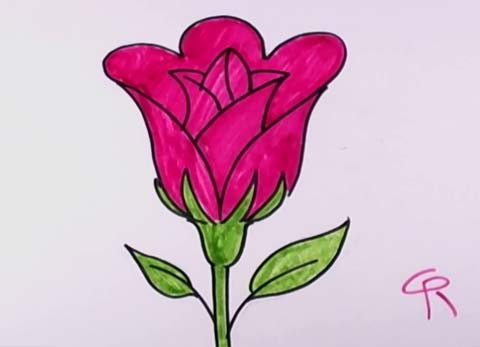 Drawn rose open Rose Congratulation! Open Rose to