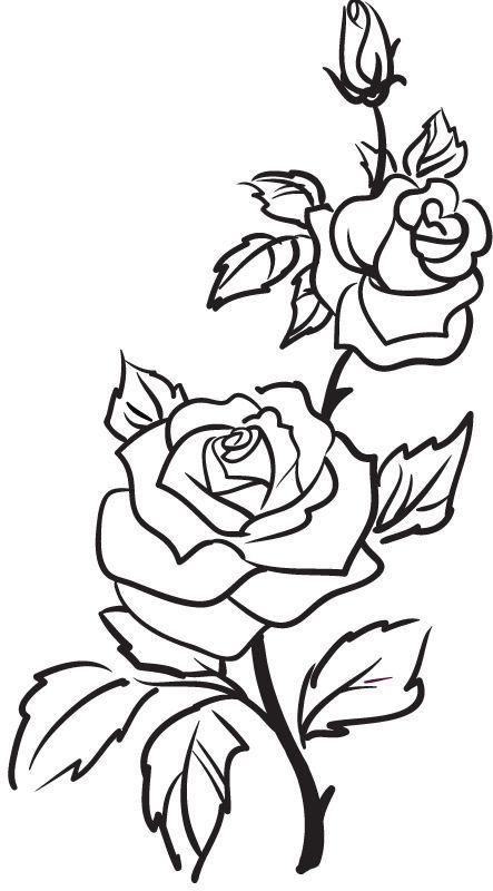 Drawn rose bush small Tattoo outline Outline Flower Outline