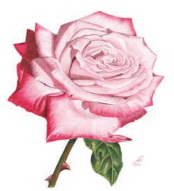 Drawn rose pastel drawing & Free how You flowers