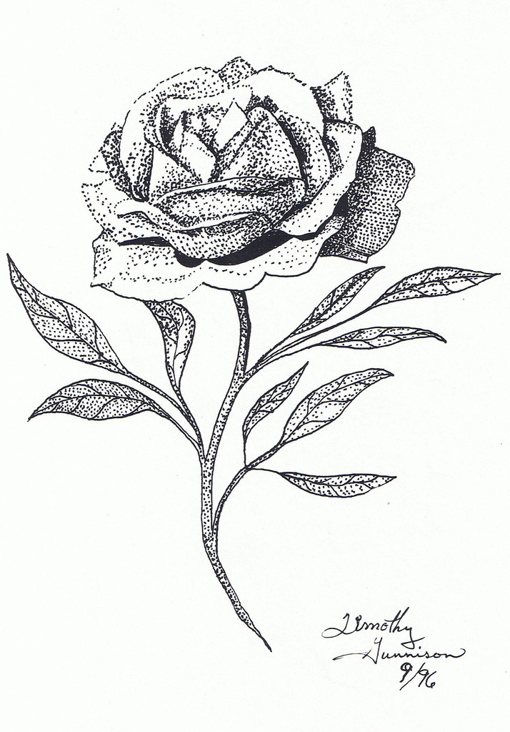 Drawn rose pen and ink And by Pen Gunnison Rose