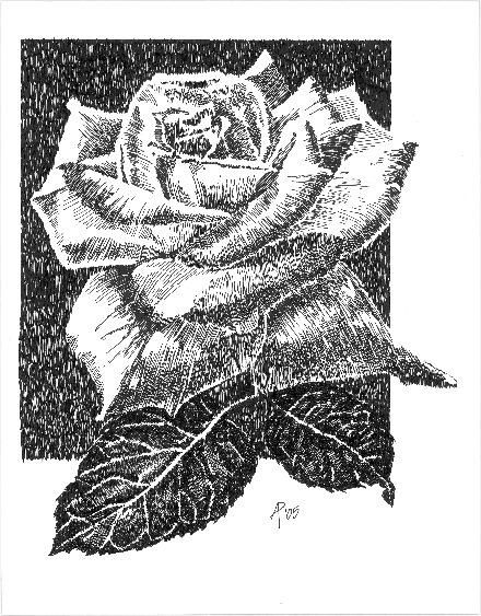 Drawn rose pen and ink & and ©Arra Drawing Mish