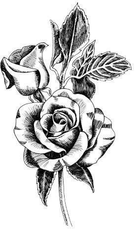 Drawn rose pen and ink Pen and Ink pen Stamp