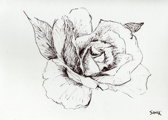 Drawn rose pen and ink & best ink about and