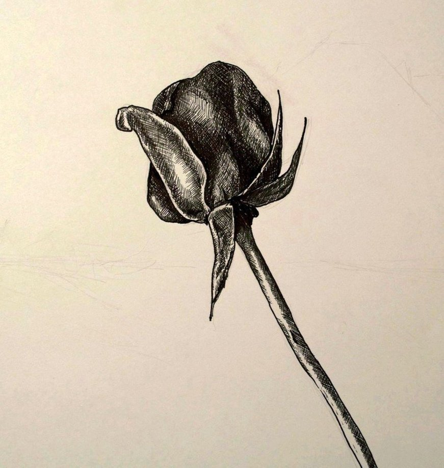 Drawn rose pen and ink DeviantArt and a Ink by