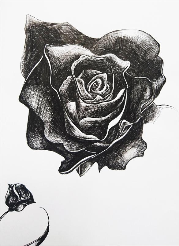 Drawn rose pen and ink Templates Rose Rose Free Pen