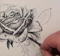 Drawn rose pen drawing — a Rose to shells