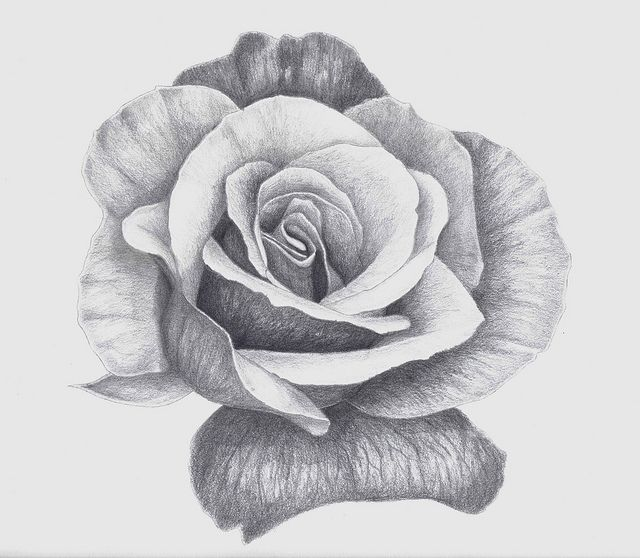 Drawn rose pen drawing Images on Drawings Pencil Pinterest