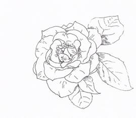 Drawn rose pen drawing With Tip Pen Valentine's by