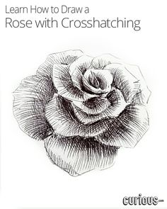 Drawn rose pen drawing Crosshatching! to the Bloom Step