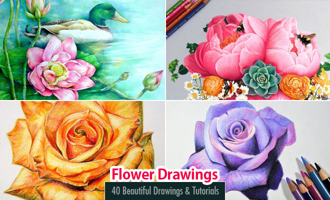 Drawn rose pencil crayon Flower Beautiful Pencil Flower 40