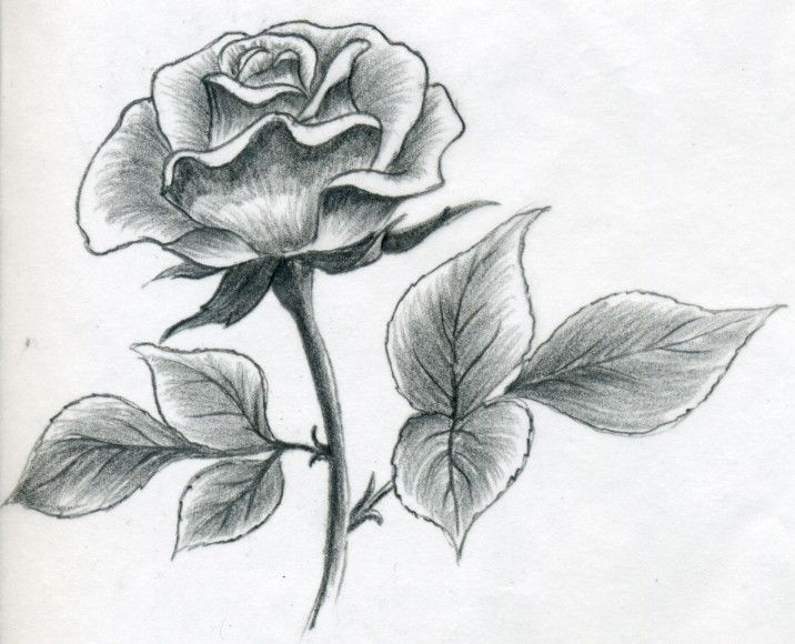 Drawn rose pencil crayon  Easy Pinterest to 25+