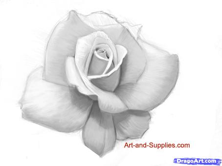 Drawn rose pencil for kid By how Step  Sketch