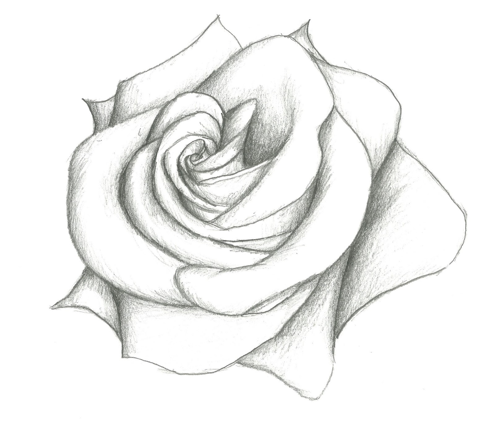 Drawn rose pencil for kid Flower tumblr flower drawing Google