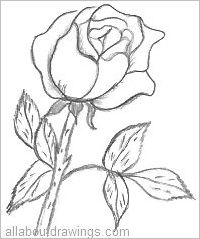 Drawn rose pencil outline Drawing Drawings Rose In Pencil