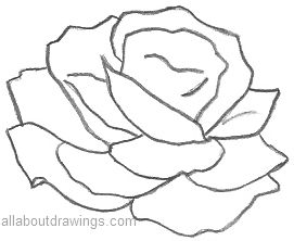 Drawn rose pencil outline Outline Drawings Beautiful Pencil Rose