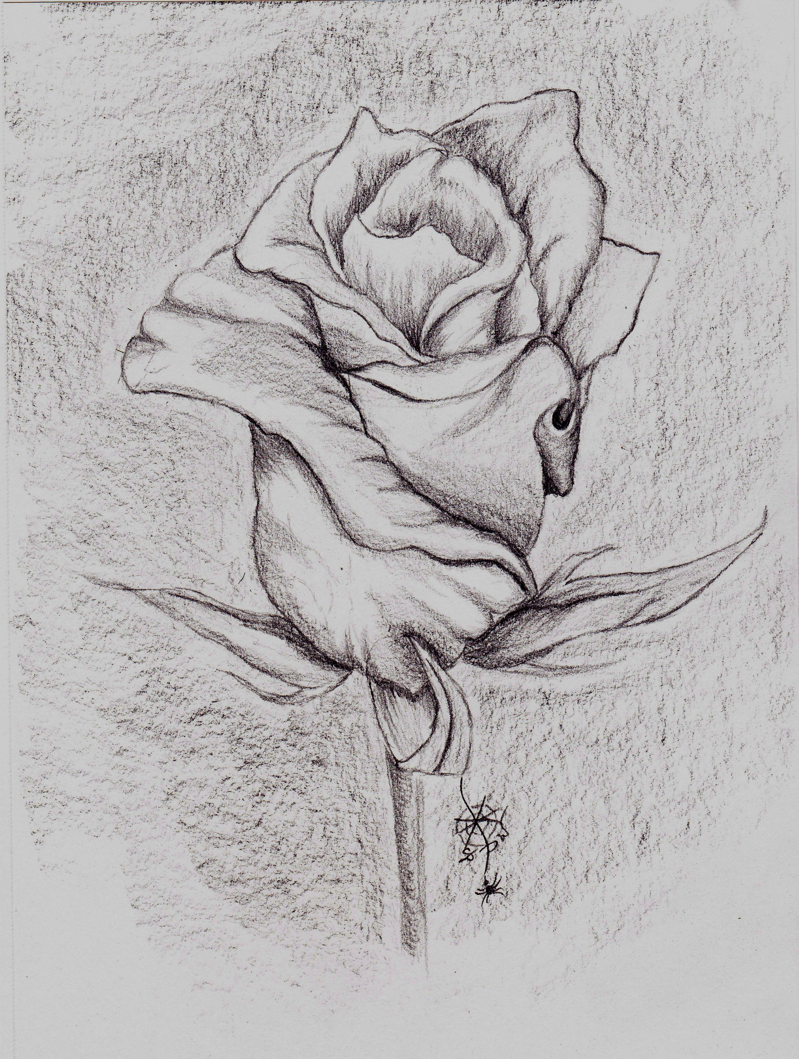 Drawn rose pencil outline Pencil Drawings amourdefraise and drawings