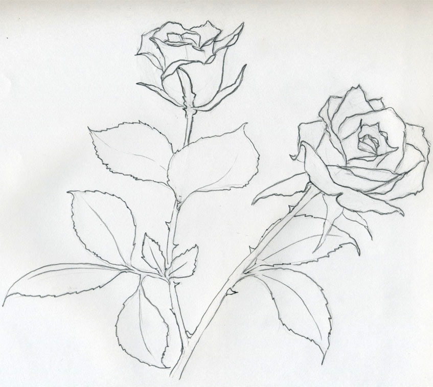 Drawn rose pencil outline The You Rose image Sketch
