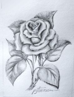 Drawn pice rose Sketches Angel tattoo Of the