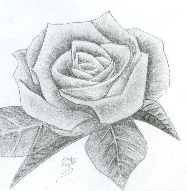Drawn rose pencil sketch Pinterest drawing(карандаш Drawings ~Mandalore рисунок)
