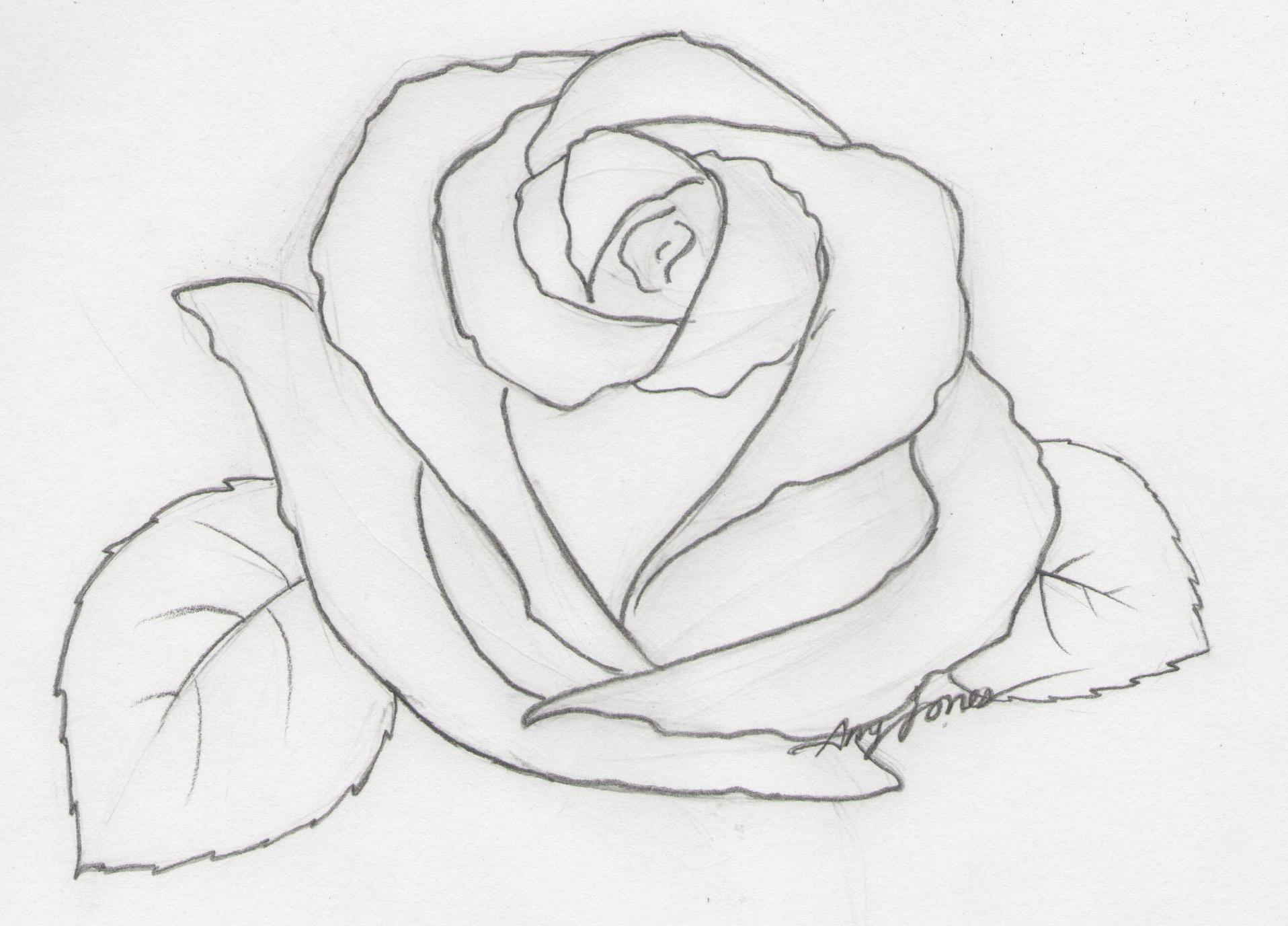 Drawn rose pencil sketch On Drawing Free  Rose