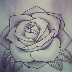 Drawn rose perfect rose Often a