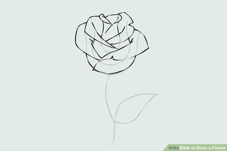 Drawn jungle rose vine 9 a Easy 6 Step
