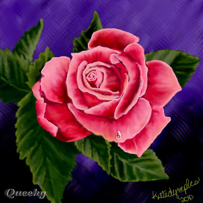 Drawn rose pink rose Rose a this in ←