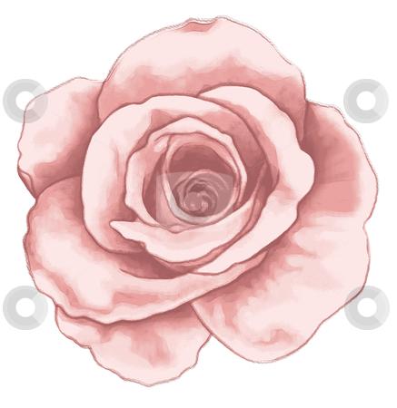Drawn rose pink rose Hand ROSE images: drawn rose