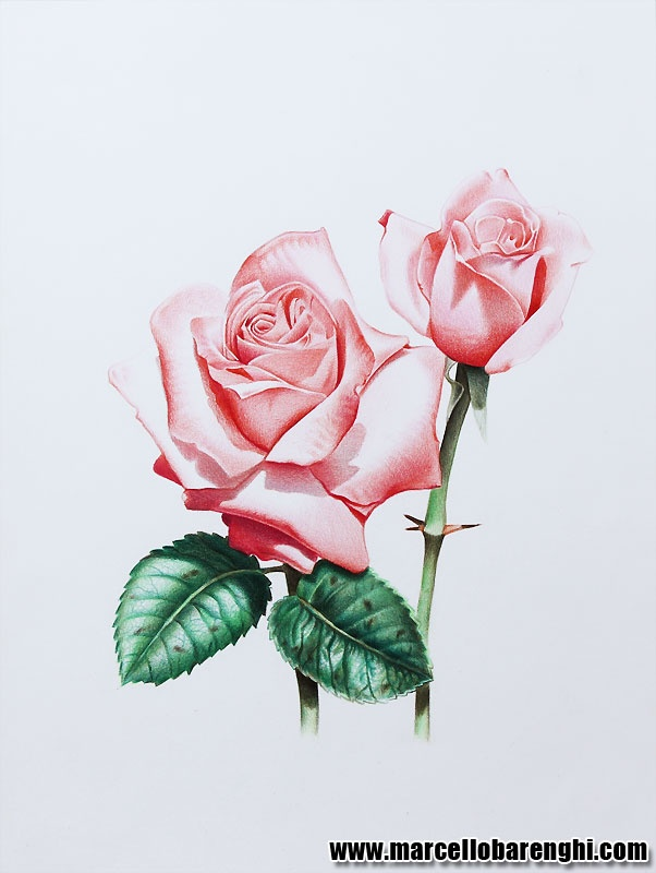Drawn plant beautiful flower Images roses Pinterest Beautiful best
