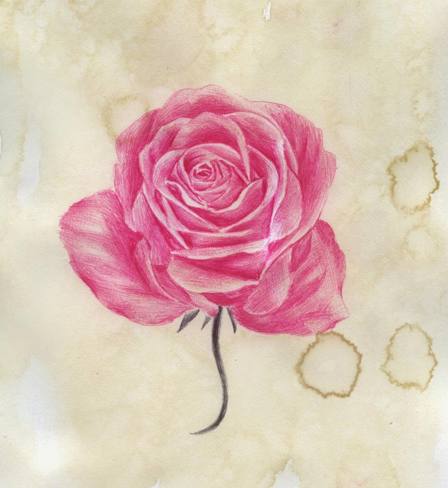 Drawn rose pink rose Tattoo Pencil Drawn Best Design