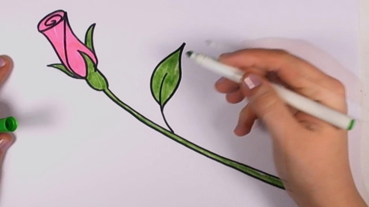 Drawn rose pink rose Rose Beginners to Beginners