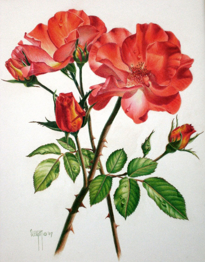 Drawn rose pretty flower For  and Drawings 25