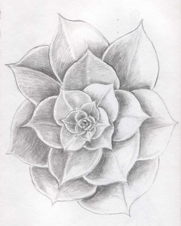 Drawn rose pretty flower If pencil designs I'm drawing