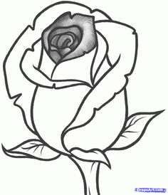 Drawn rose bush rosebud Step to Rose step Bud