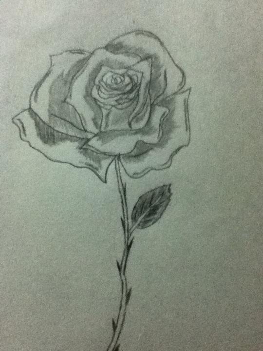 Drawn rose pretty rose Surrender the Rose Rose drawn