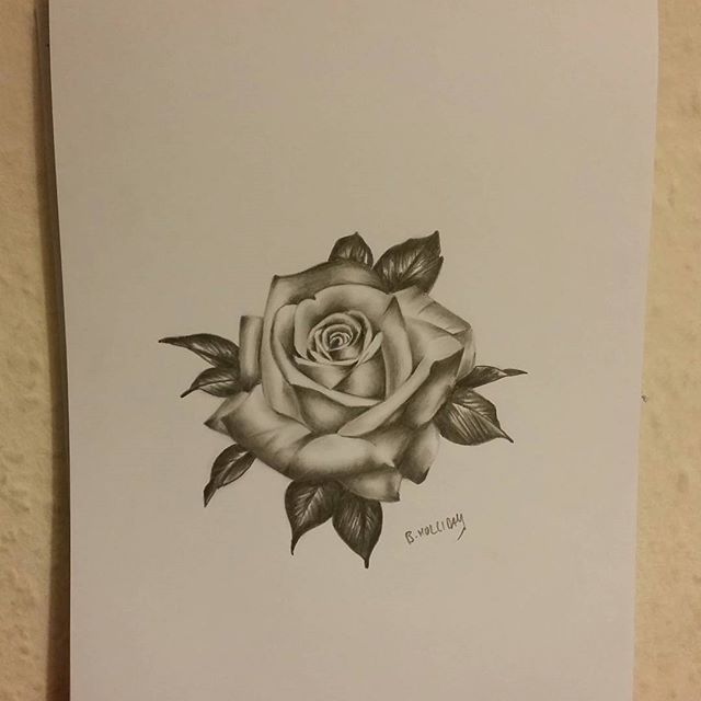 Drawn rose pretty rose To draw on this a